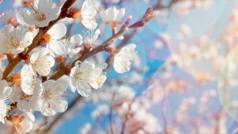 Акция «Активная весна»